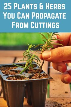 Food garden, Planting herbs, Plants, Home vegetable garden, Vegetable garden design, Veg garden - Growing new plants from cuttings is a great way to increase your stock in a relatively short time Roo - #Foodgarden