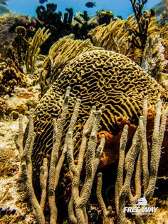 Friend and Dive Instructor Elia Zane took me out for two beautiful dives. These are his pictures. #freewayscubadving #eliazane #tourguidekay #tourguide #playadelcarmen #tulum #cancun #traveltips #privatetours #mexico #privatetourguide #diving https://www.facebook.com/diving.my.world
