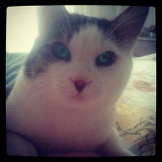Uykulu gözlerle döndüm rüyamdan, sana proplan mama aldım mahalle pet shopundan:)