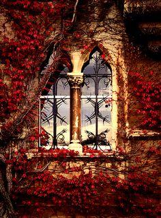 Autumn window - Oxford, England