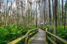 What's more inviting than a planked walkway winding through a dense thicket of…