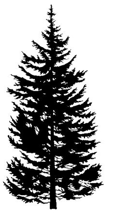 evergreen silhouette | Rocky Mountain Douglas-fir - Trees, insects and diseases of Canada's ...