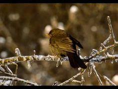 Chants d'oiseaux de France partie 1 Birds, Nature, Soul Food, Animals, Friends, Naturaleza, Wild Animals, Music, Slide Show