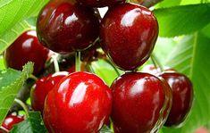 Η εβδομαδίαια δίαιτα αποτοξίνωσης για να χάσεις κιλά την τελευταία στιγμή | HASHTAG - Uncovered News - ΓΥΝΑΙΚΑ - ΑΝΤΡΑΣ - ΣΧΕΣΕΙΣ - ΣΥΝΤΑΓΕΣ - ΔΙΑΙΤΑ - ΜΟΔΑ - ΑΣΤΡΟΛΟΓΙΑ Dwarf Cherry Tree, Cherry Fruit Tree, Cherry Seeds, Fresh Cherry, Patio Fruit Trees, Dwarf Fruit Trees, Online Plant Nursery, Cactus, Buy Plants Online