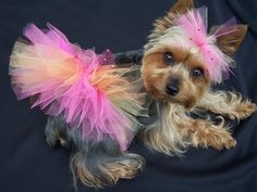 Dog Tutu in Any Color  You choose xx small and x by Frillypaws, $20.00