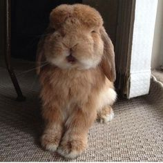 Bunny Rabbit Cute Bunny, Bunny Rabbit, Funny Cute, Cute Animals, Instagram Posts, Bunnies, Hare, Rabbits, Charity
