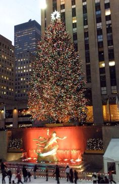 #Christmas in NY! Get a chance to see the largest tree!