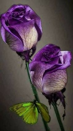 Beautiful Flowers Wallpapers, Beautiful Rose Flowers, Exotic Flowers, Amazing Flowers, Flower Phone Wallpaper, Flower Wallpaper, My Flower, Flower Art, Tea Roses