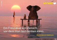 Lyric Quotes, Lyrics, German Quotes, Poems, Elephant, Humor, Friends, Elephant Pictures, Positive Thoughts