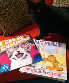 I Can Has Cheezburger & Garfield 2014 Cat Calendar Giveaway! Cat Calendar, Cat Art, I Can, Giveaway, Folk, Things To Come, Kitty, Canning, Cats