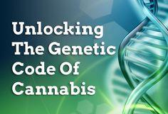 CBD Sequencing the Cannabis Genome Medical Marijuana, Cannabis, Healthy Facts, Hemp Oil, Genetics, Health Benefits, Weed, Medicine, Coding
