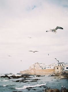 Seagulls on the Coast of Morocco | photography by http://photographybycatherine.co.uk/