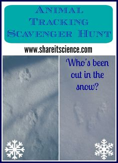 Share it! Science News : Animal Tracking Scavenger Hunt. Your Guide to Winter Wildlife Tracking with Children