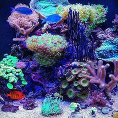 Beautiful reef aquarium