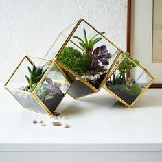 Shop terrarium from west elm. Find a wide selection of furniture and decor options that will suit your tastes, including a variety of terrarium. Terrarium Design, Glass Terrarium, Succulent Terrarium, Terrarium Plants, Terrarium Containers, Plant Pots, How To Make Terrariums, Wedding Gift Registry, Decoration Plante