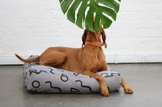 chic dog accessories from Zana and Hunter Bennington