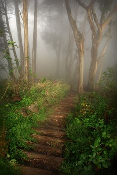 A path in the mist