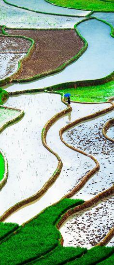 Rice fields on terraced of Mu Cang Chai, YenBai, Vietnam -- Copyright: Cristal Tran / via shutterstock