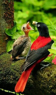 Mother bird feeding her baby chick. #bird #birds