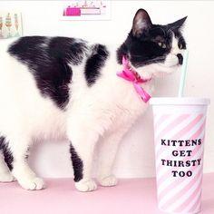 """Drink your water kitties!!! #onegallonaday #hydrationnation #drinkup #regam @shopbando"" Photo taken by @fitnfreelife on Instagram, pinned via the InstaPin iOS App! http://www.instapinapp.com (03/03/2015)"