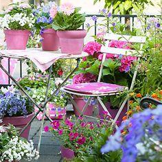 Piante da balcone resistenti al sole [fOTO] | Pinterest | Balconies