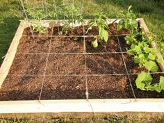 How to Build Your Own Square Foot Garden in 10 Easy Steps