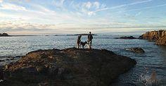 Gîtes en Bretagne, vacances avec chien(s)