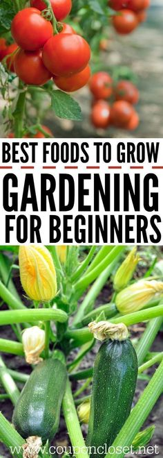 How to garden for beginners. - Gardening for Beginners - The best foods to grow for beginner gardening. These are easy foods to grow in the vegetable garden #vegetablegardenbeginner