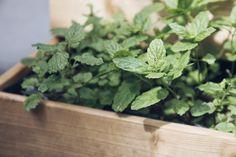 Royal Garden / Plantbutler