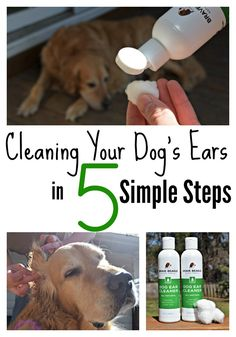 Cleaning your dog's