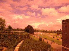 Kensington pink