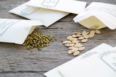 5 Steps to Successful Seed Saving