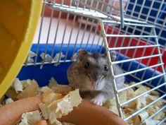 Hamster. Foto de Cristina Sueta.