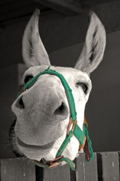 Donkey you can see how soft his nose is