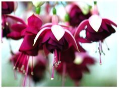 Fuschia Flowers in another shade, also love these colors, more inspiration for…