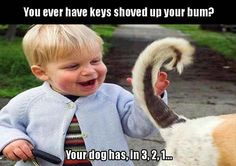 Funny Pictures of The Day 37 photos Morably