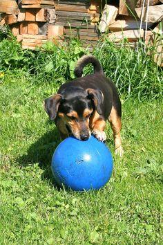 Max en zijn bal