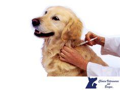 VETERINARIA DEL BOSQUE. En la Clínica Veterinaria del Bosque, contamos con excelentes programas de medicina preventiva como la aplicación de vacunas para perros, gatos y hurones de los laboratorios más reconocidos y con los distribuidores del ramo que se han destacado por el mantenimiento de la cadena fría para que los biológicos. Te invitamos a comunicarte con nosotros para agendar una cita con nuestros especialistas a los teléfonos 5360-3311 o 5240-0404. #veterinaria
