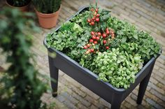 grow your own healthy herbs, spices and vegetables in the green basics grow table super XXL
