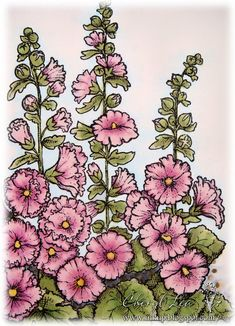 drawings of holly hocks - Google Search