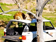 San Diego Safari Park, San Diego CA