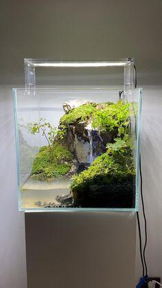 Turtle Aquarium, Aquarium Garden, Mini Aquarium, Aquarium Landscape, Nature Aquarium, Planted Aquarium, Aquarium Aquascape, Fish Tank Terrarium, Frog Terrarium