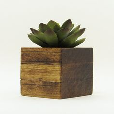 office planter. small wood succulent planter pot modern cube plant holder indoor garden cacti office