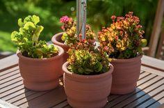 Jardins em Pequenos Espaços | CasaDois Editora – Um toque criativo