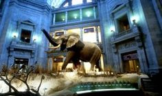 The elephant in the National Museum of Natural History's rotunda is one of the largest land mammals on record.