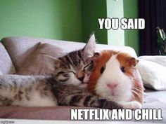 """19 Hilarious Examples of What """"Netflix and Chill"""" Really Means"""