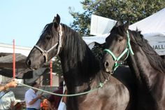 Horses and The Oldest Fair in Spain