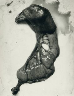 Chicken Parts by Frederick Sommer