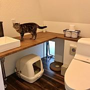 Bathroom/階段下/猫と暮らす。/新築建築中/ねこも家族♥/猫通路...などのインテリア実例 - 2017-09-16 04:28:51 Soft Kitty Warm Kitty, Narrow House, Cat Room, Pet Peeves, Pet Furniture, Space Cat, Cat Walk, Cat Life, Animal Shelter