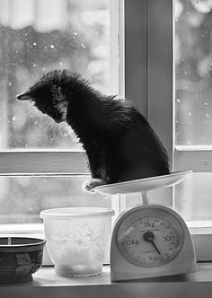 love a kitty...